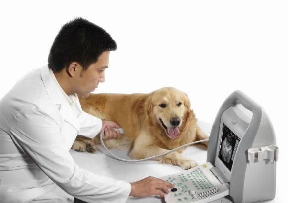 Как проводится УЗИ  собакам