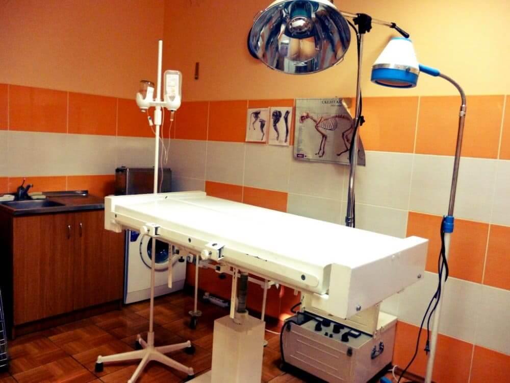 операционная в ветеринарной клинике