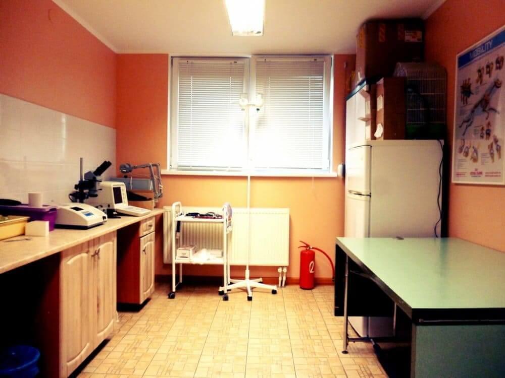кабинет в ветеринарной клинике фото 2