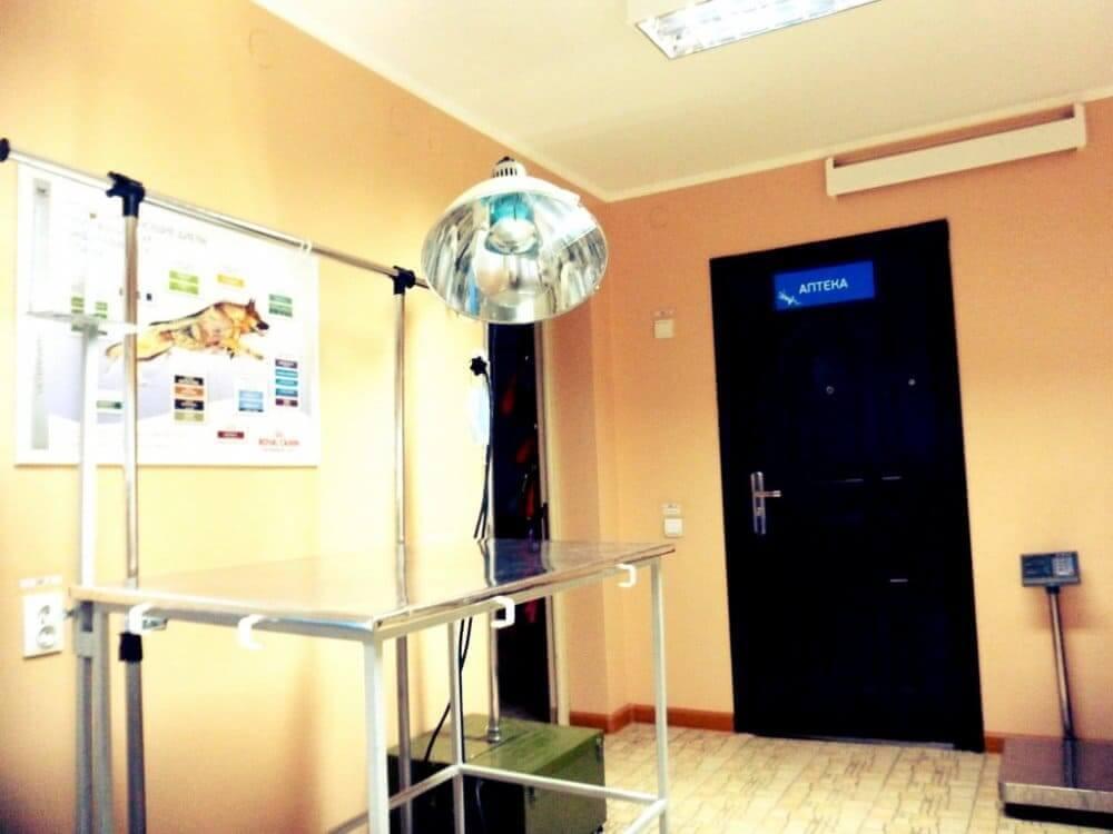 кабинет в ветеринарной клинике фото 3