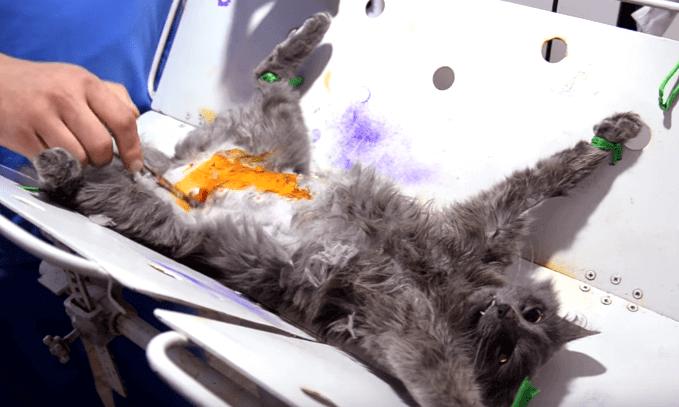 Операция по стерилизации занимает от 30 минут до 1 часа