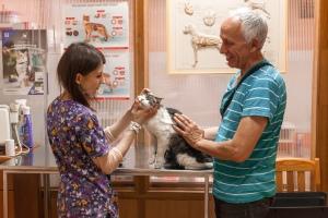 осмотр кота в ветеринарной клинике