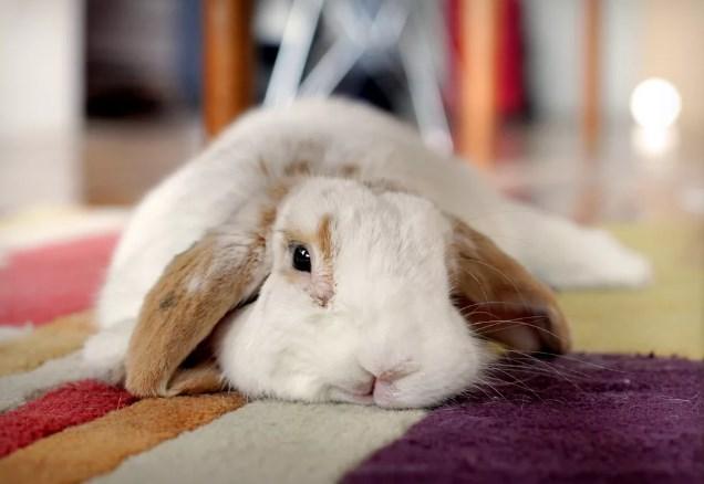 заболевший кролик