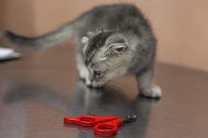 кошка на стрижке когтей