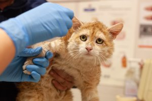 лечение ран у кота