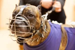 лечение собак в Ветмед