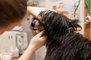 осмотр зубов у собаки