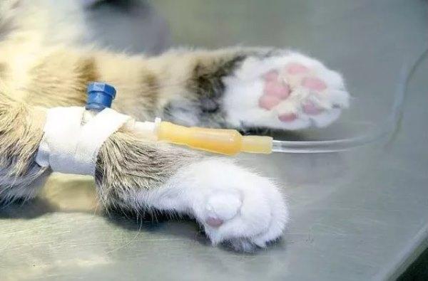 капельница при болезни почек у кошки