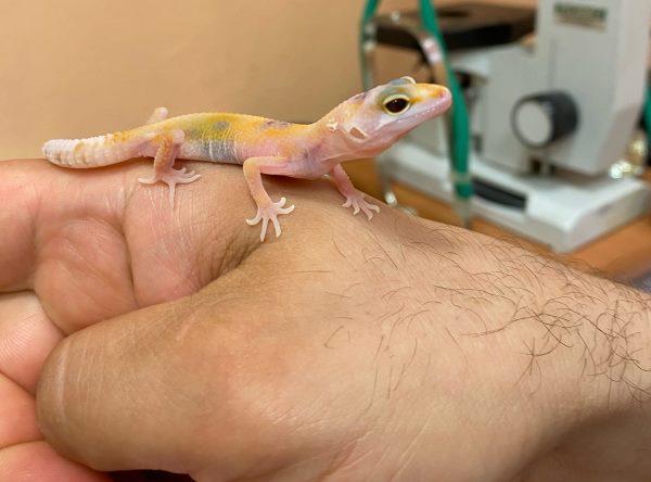 ящерка на руке