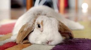 кролик на коврике