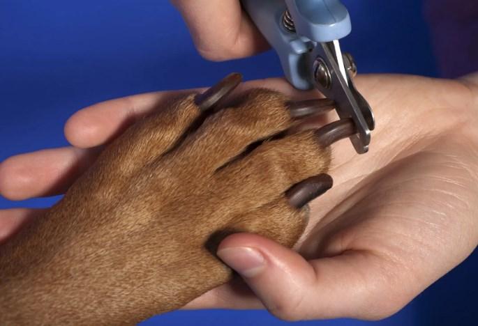стрижка когтей собаке