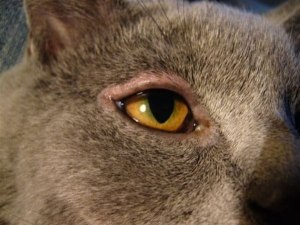 заболевания кошек фото 1